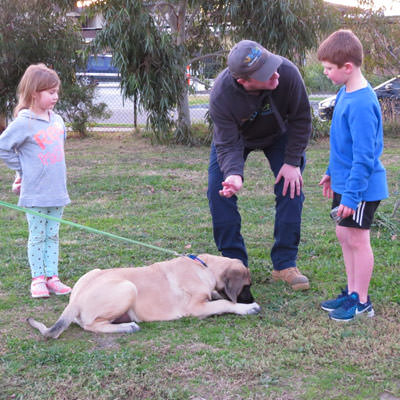 Guided Animal Therapy Sessions Therapy Animals Australia